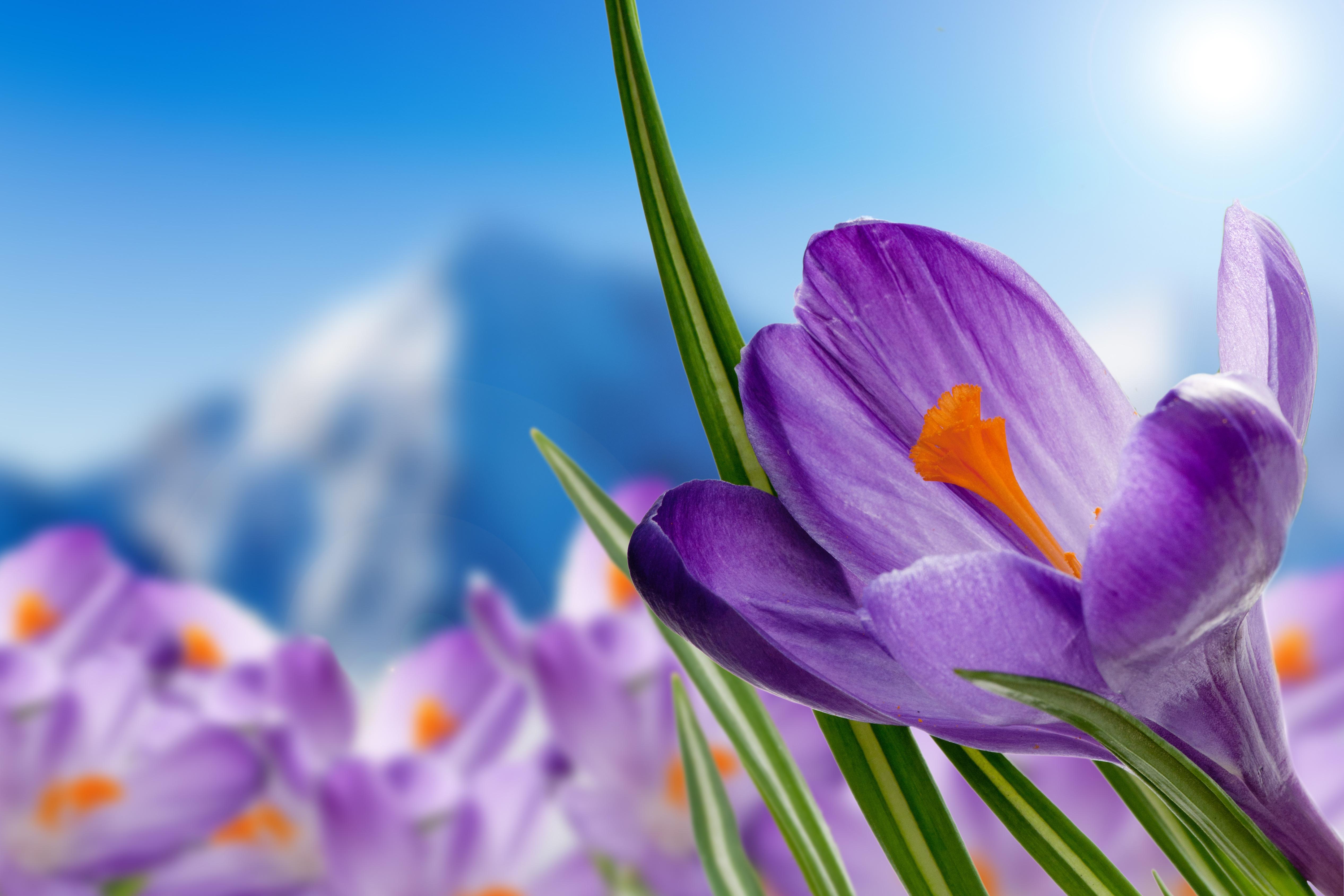 Flower - HD1920×1280