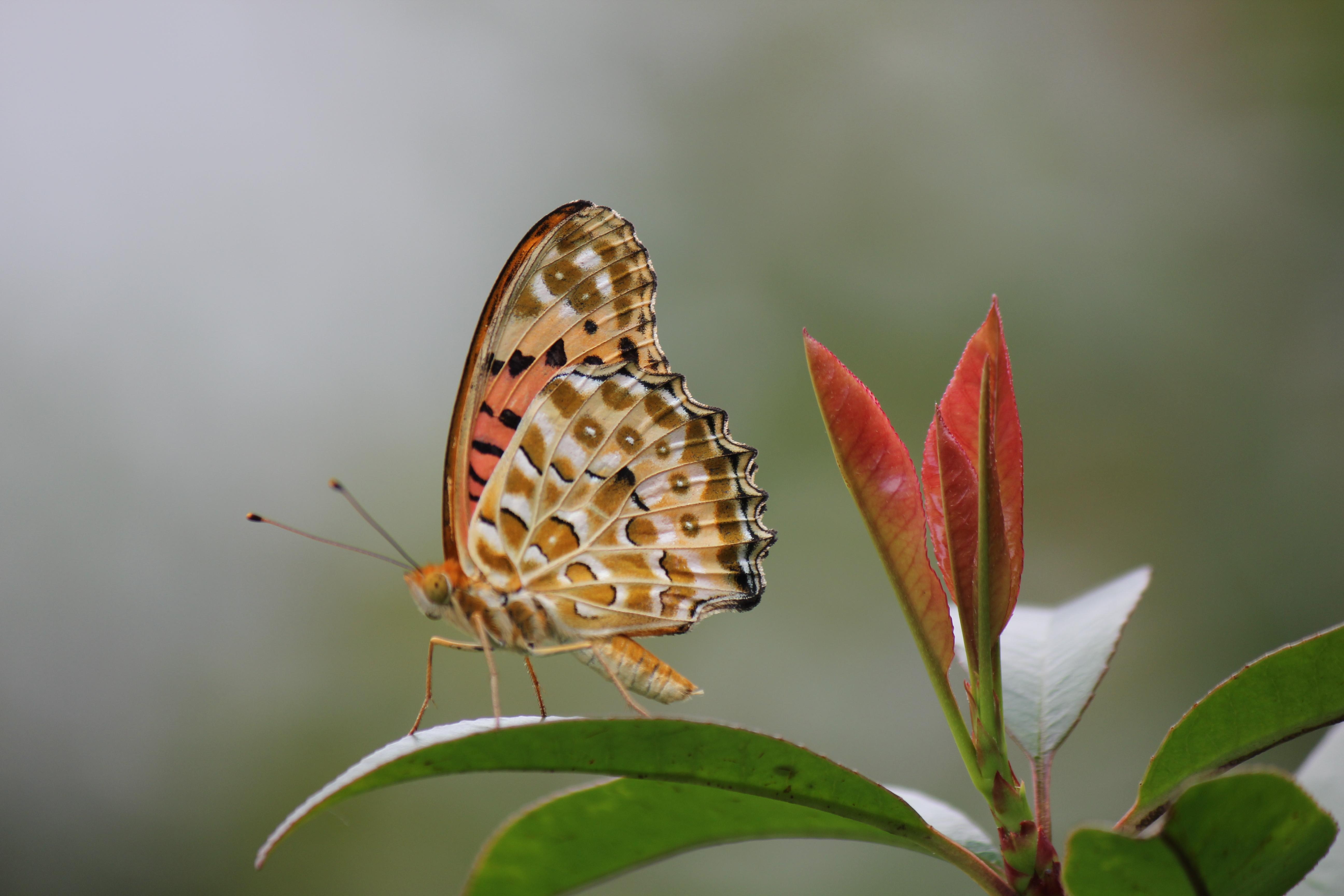 Бабочки растение макро  № 3660348 бесплатно