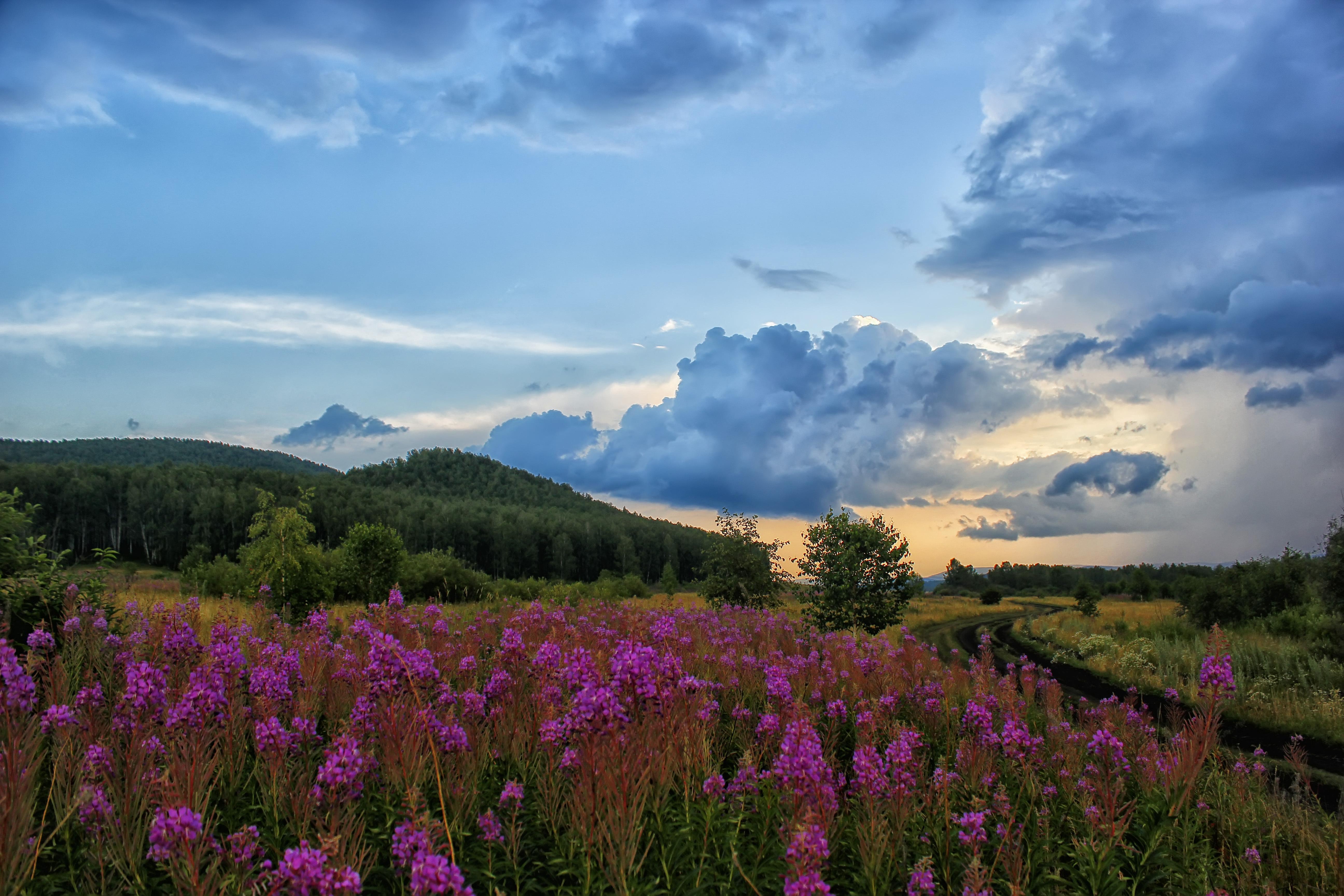 цветы поляна горы холм небо  № 3836142 бесплатно