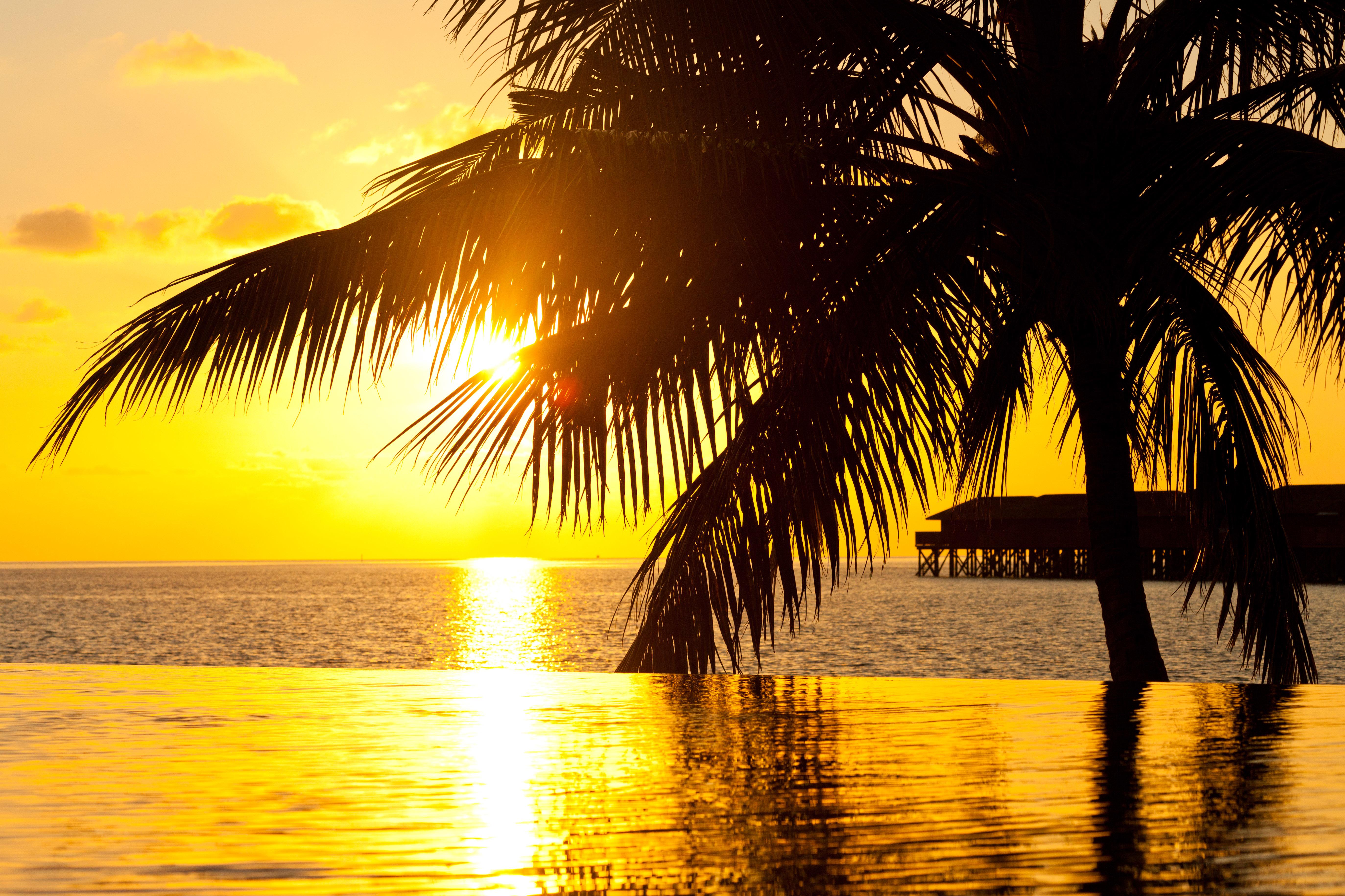 природа бассейн рассвет солнце пальмы отдых  № 2455745 загрузить