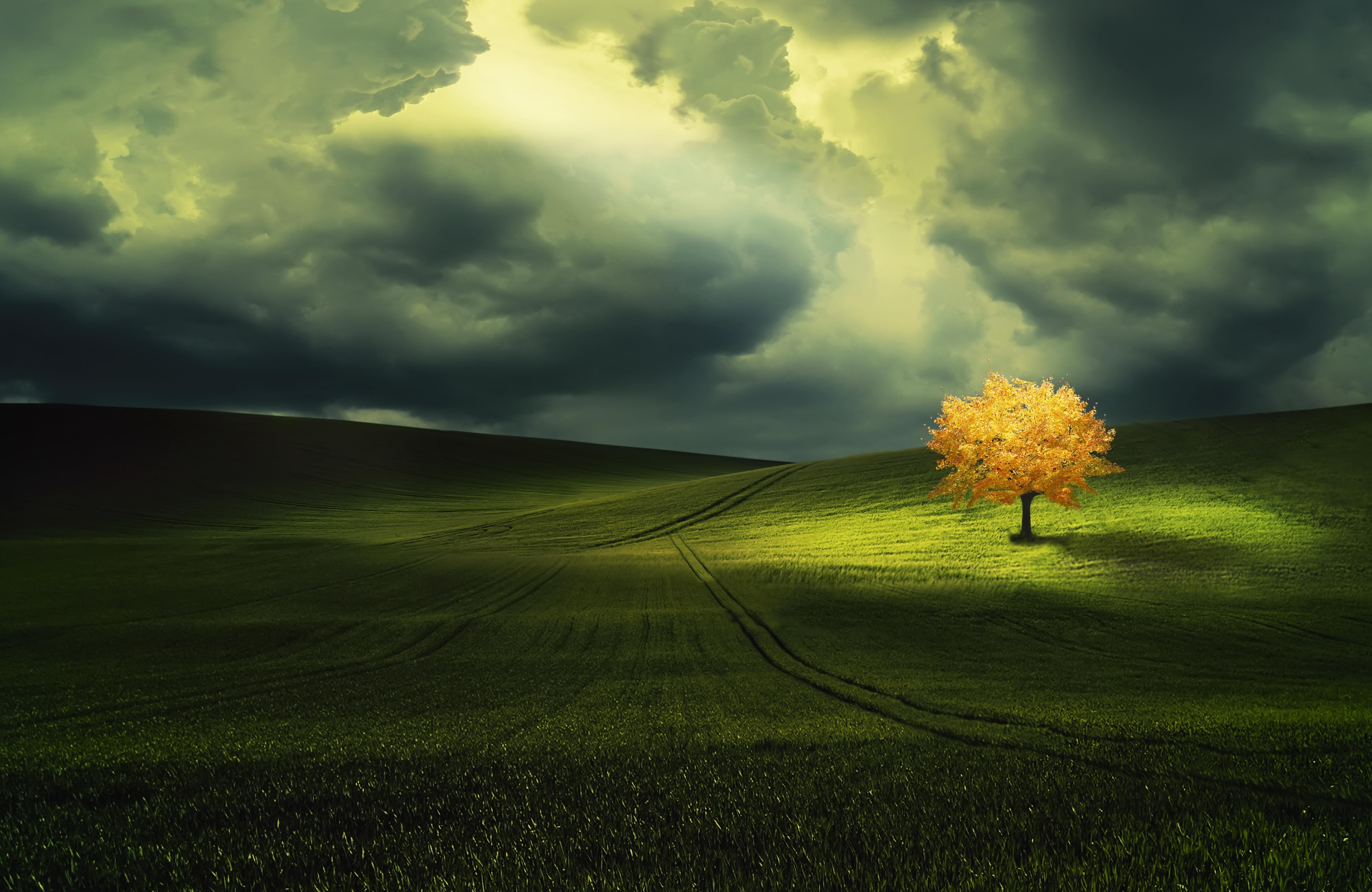 метеорит поле дерево дети  № 1801974 загрузить
