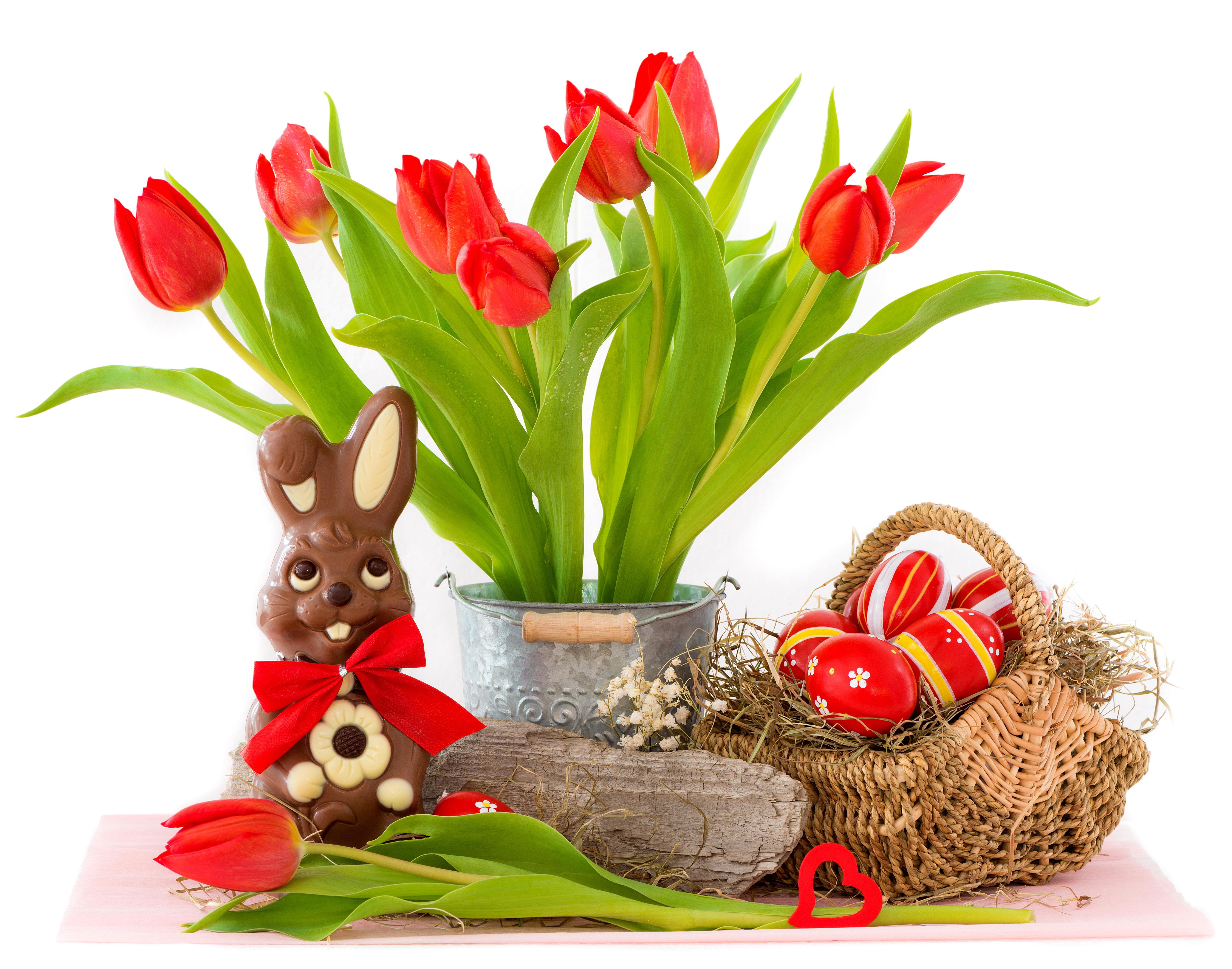 кролик с тюльпанами  № 1144631 бесплатно