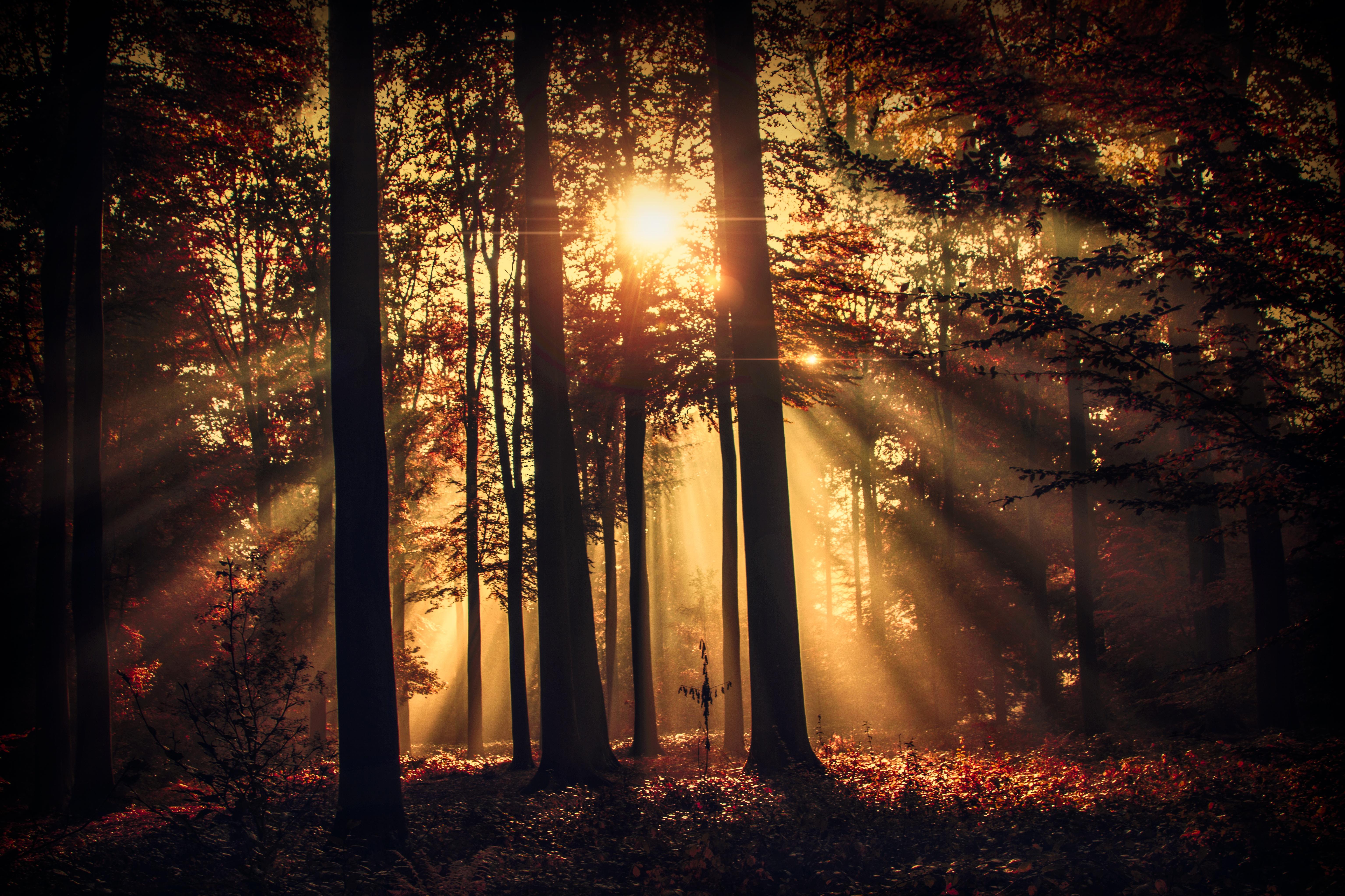 Лучи лес деревья  № 3847400  скачать