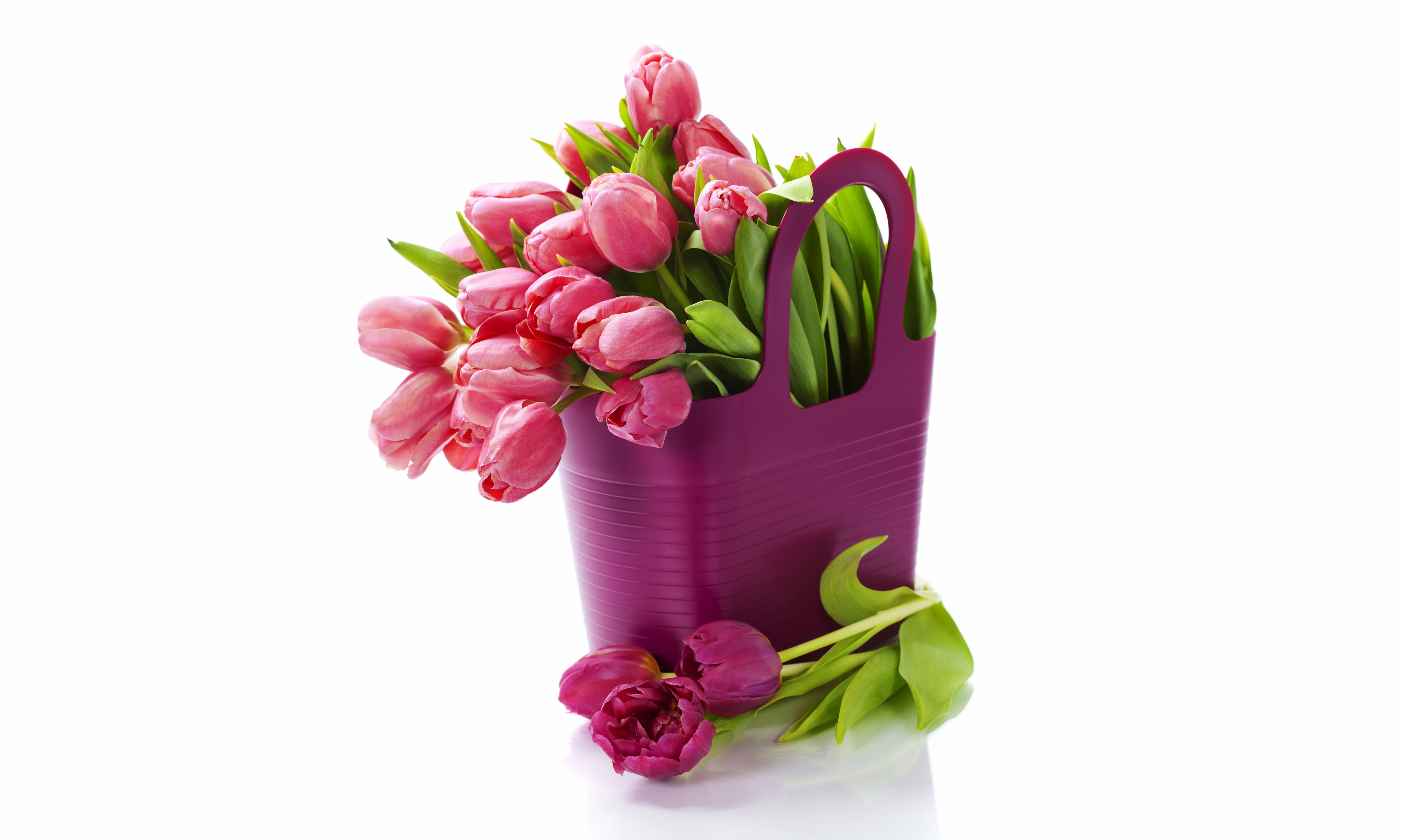 фиолетовые цветы в коробке  № 2541493 загрузить