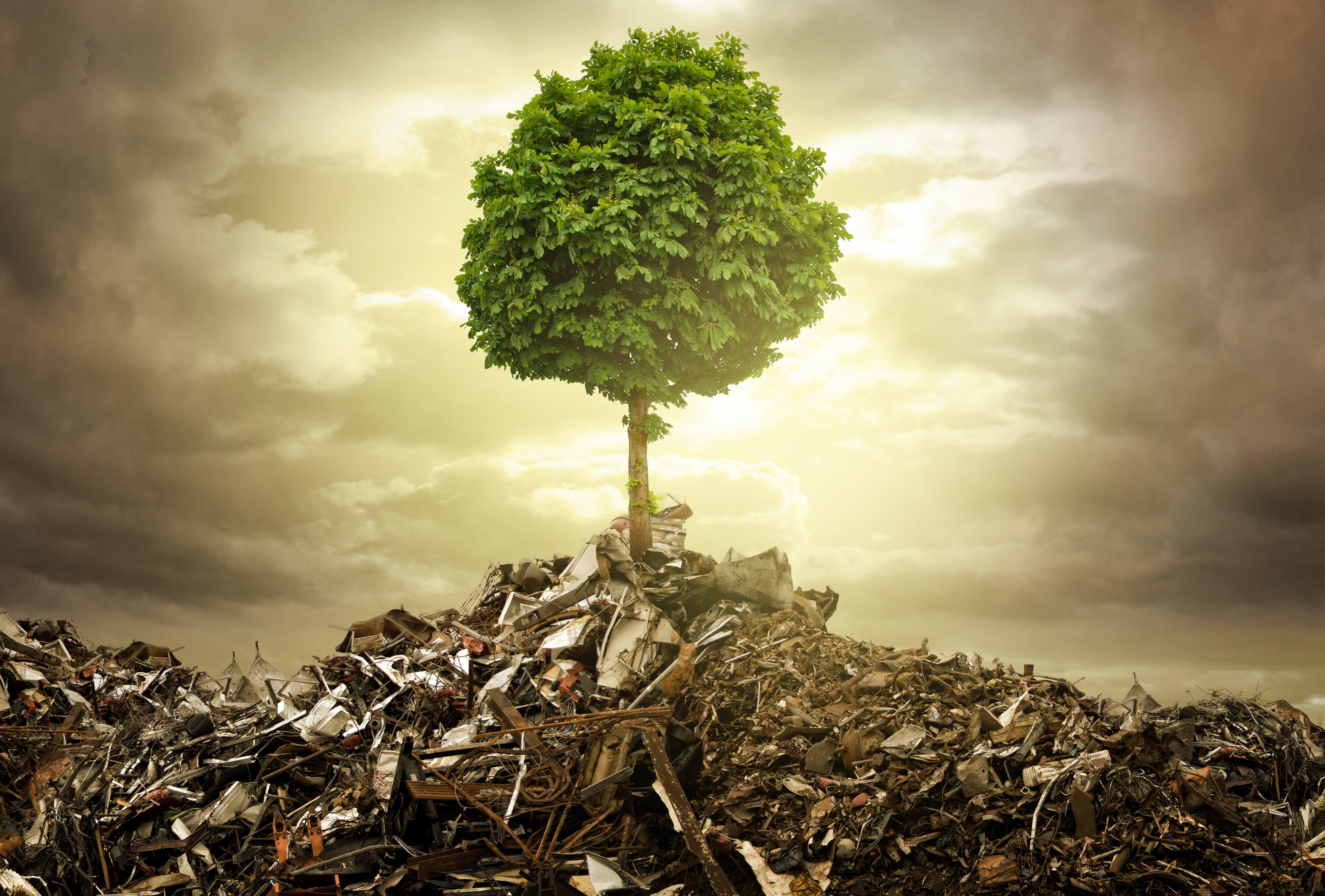 creating a growing culture of environmental Creating strong team culture people thrive in work environments where they can continue to learn and grow be mindful of creating create an environment.