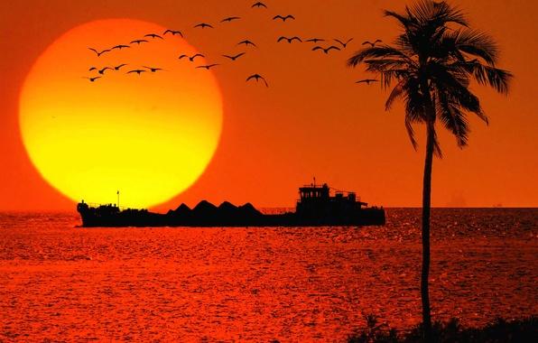Picture sea, the sun, sunset, birds, Palma, ship, tanker, silhouettes, Goa