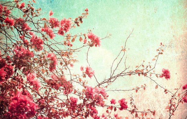 Picture summer, the sky, flowers, paper, grain, glow, texture, day, spot, wallpaper, cardboard, ornament, material, flowering, …