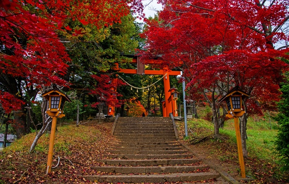Picture autumn, leaves, trees, Park, Japan, lights, ladder, stage, colorful, Fujiyoshida