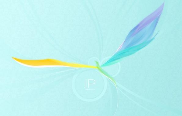 Picture wings, minimalism, vector, Bird