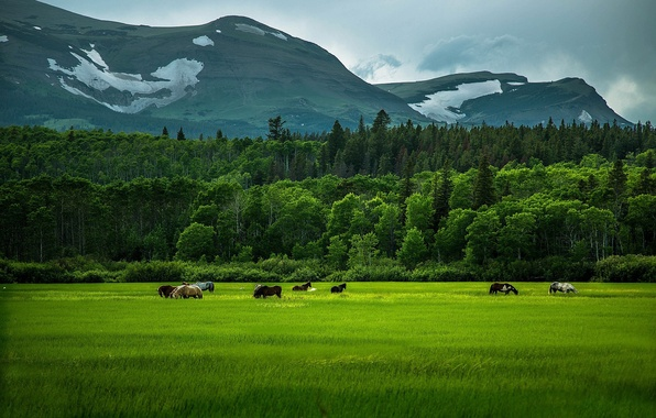 Picture greens, field, forest, summer, grass, trees, mountains, horse