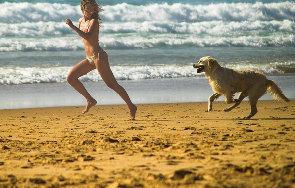 Picture beach, dog, The game