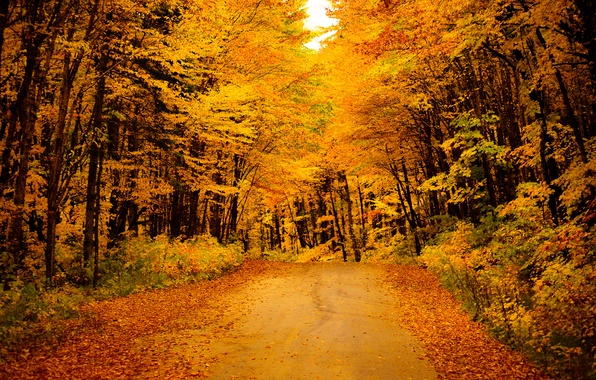 Picture road, autumn, forest, leaves, trees, yellow, the bushes, gold