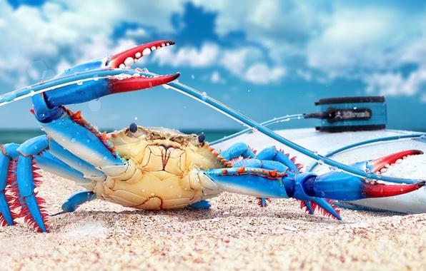 Picture rendering, crab, render, digital art, blue crab