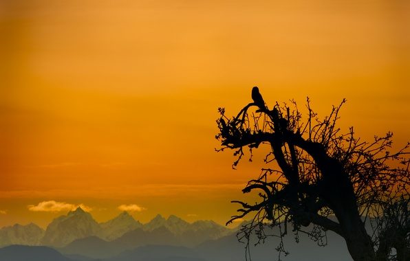 Picture the sky, mountains, tree, owl, bird, silhouette, glow
