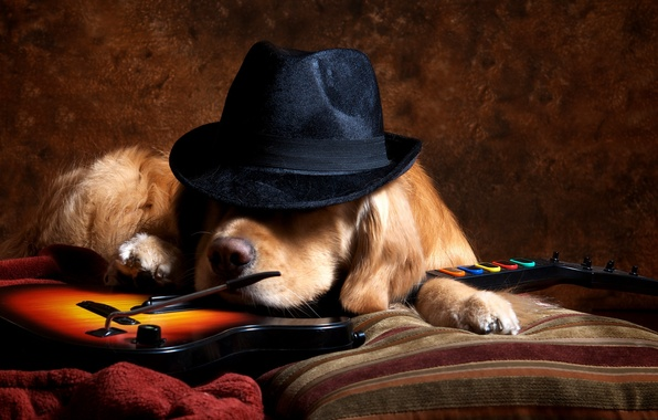 Picture each, guitar, dog, hat
