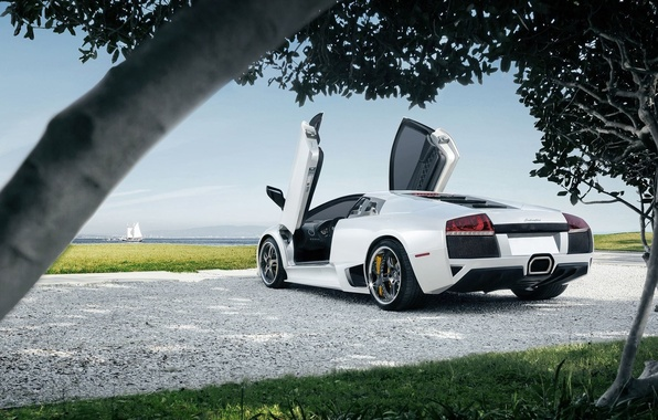 Picture Lamborghini, Sky, Grass, Sun, Murcielago, White, Supercar, Trees, Rear, LP640-4