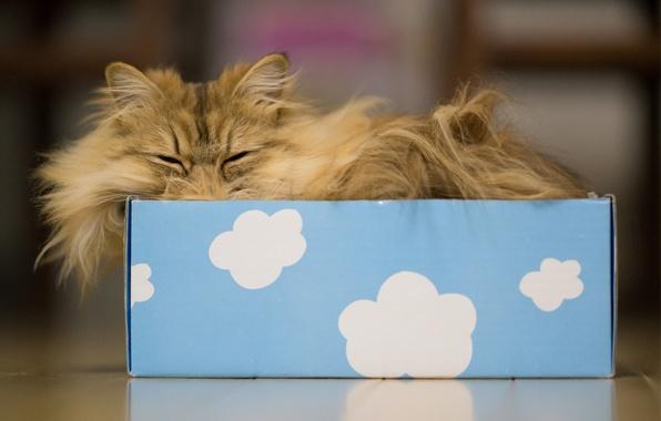 Picture cat, clouds, box, sleep, Daisy, Ben Torode, Benjamin Torode
