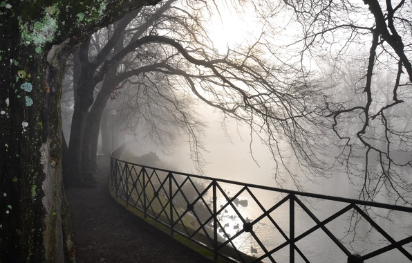 Picture road, forest, trees, nature, fog, river, branch