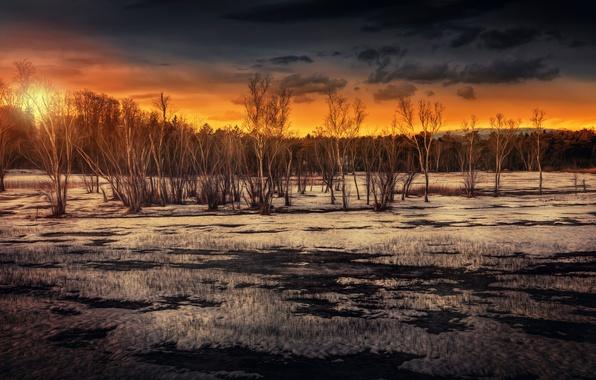 Picture the sun, trees, treatment, Marshland sunset