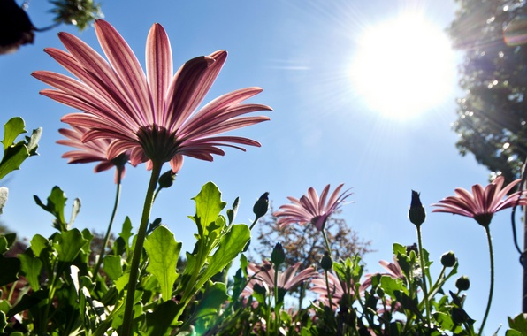 Picture the sky, the sun, flowers, nature, pink, spring, petals, from the bottom up