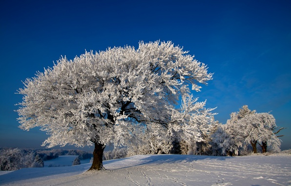 Picture photo, Nature, Winter, Trees, Snow