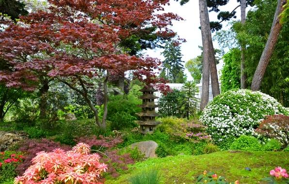Picture trees, flowers, France, Paris, garden, the bushes, Japanese gardens, Albert-Kahn