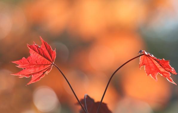 Picture autumn, leaves, nature, paint