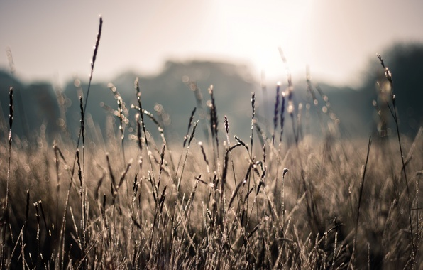 Picture field, summer, the sun, macro, rays, nature, photo, plants, blur, spikelets, wallpapers, bokeh, bokeh