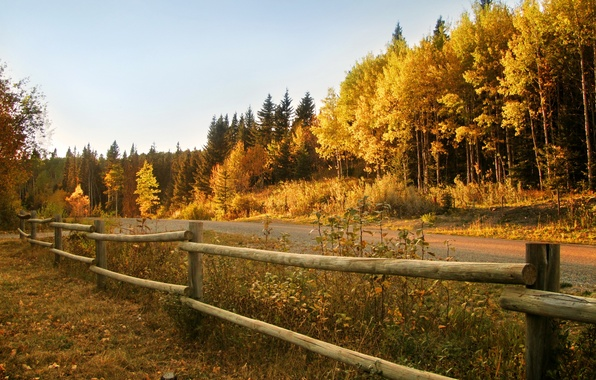 Picture road, autumn, forest, the fence
