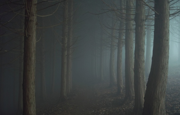 Picture road, fog, the darkness, Forest, twilight, path