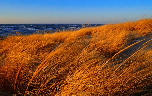 Picture sea, wave, autumn, the sky, grass, the wind, shore