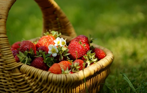 Picture grass, berries, Strawberry, flowers, basket