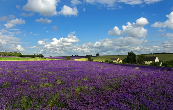 Picture field, the sky, clouds, trees, flowers, house, hills, meadow