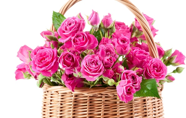 Picture flowers, basket, roses, bouquet, pink, basket, beautiful