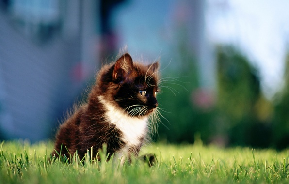 Picture cat, grass, cat, the city, kitty, black