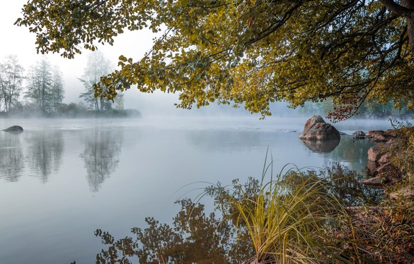 Picture autumn, forest, fog, lake, pond, stones, dawn, morning