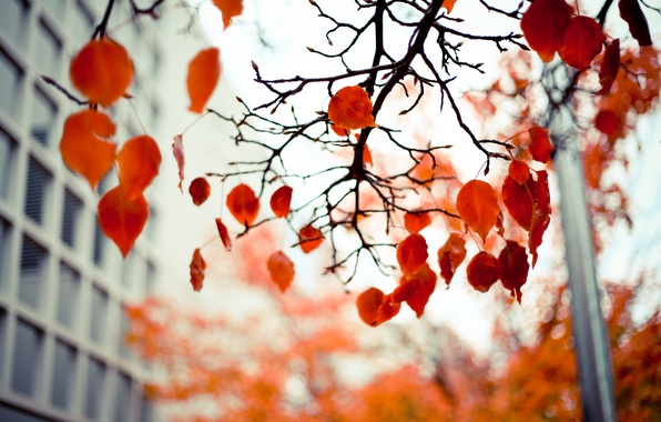 Picture autumn, leaves, branches, red