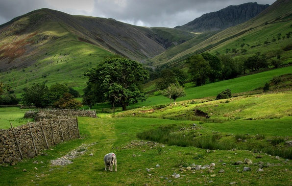 Picture the sky, grass, clouds, trees, mountains, the fence, Scotland, sheep