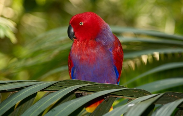 Picture branches, Palma, bird, foliage, parrot