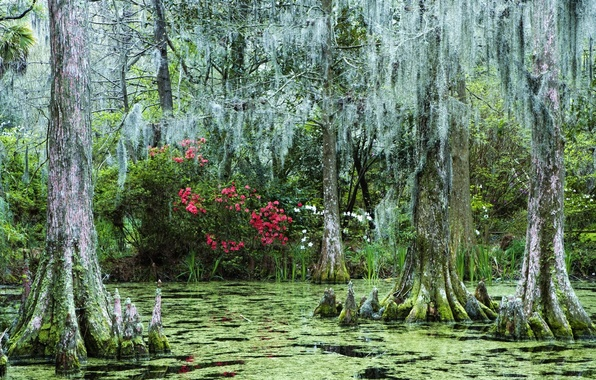 Picture forest, flowers, swamp, sunken