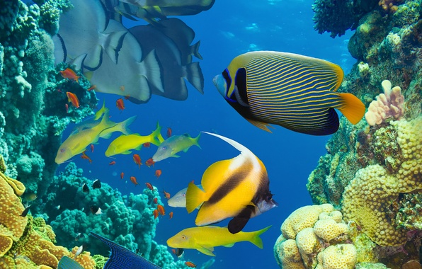 Picture sea, the ocean, fish, under water, underwater, sea, ocean, fish, coral reef, coral reef