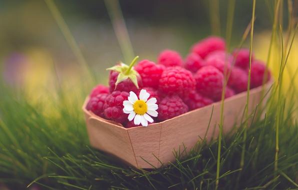 Picture greens, flower, grass, raspberry, background, widescreen, Wallpaper, food, Daisy, berry, wallpaper, widescreen, background, full screen, …