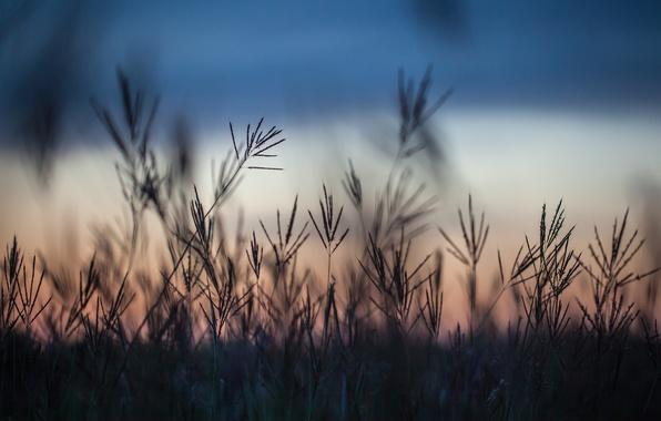 Picture field, grass, macro, sunset, the evening, Autumn, blur