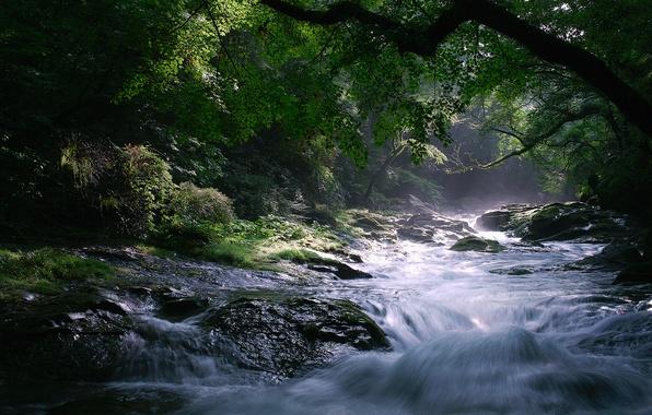 Picture trees, nature, river, stones, stream