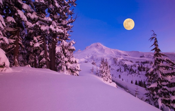 Picture winter, snow, trees, mountains, night, nature, the moon, a month, forest