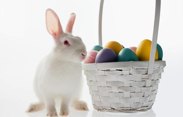 Picture basket, egg, rabbit, Easter, easter