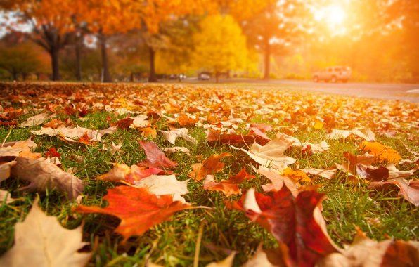 Picture road, leaves, macro, landscape, nature, road, close-up, landscape, nature, beautiful, beautiful, the sun's rays, leaves, …