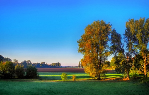 Picture autumn, trees, field, morning