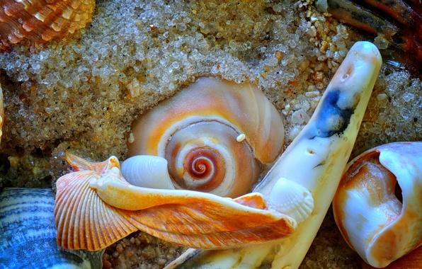 Photo wallpaper sand, sea, the bottom, sink, shell