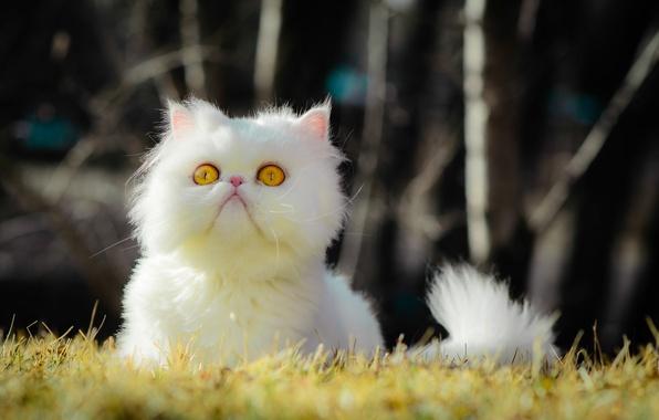 Picture grass, eyes, cat, grass, eyes, cat, bokeh, bokeh, yellow eyes, yellow eyes